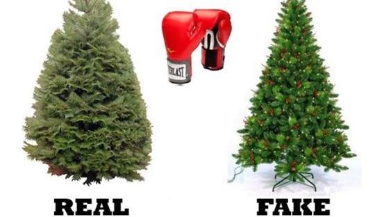 should christmas trees stay real the lisgarwrite - Christmas Trees Real